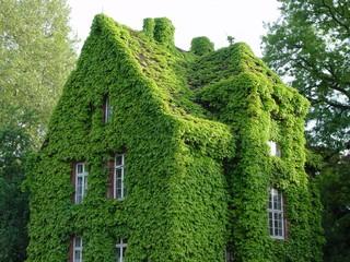 Озеленение вены вместо ремонта